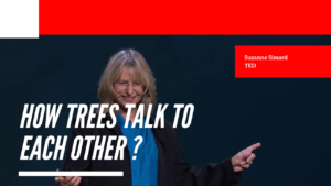 How trees talk to each other? - Suzanne Simard